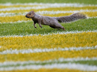 Image: Squirrel goes nuts