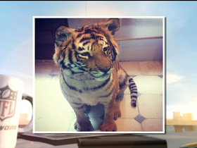 Video - Darnell Dockett, take a tiger to work day