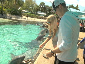 Video - Miami Dolphins QB Ryan Tannehill's Aces take a trip to SeaWorld Orlando