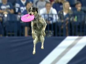Frisbee-catching dog performs at halftime