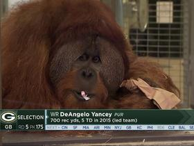Watch: Davis goes bananas for Rocky, Colts draft-picking orangutan