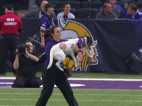 Frisbee dogs entertain during Bears vs. Vikings halftime