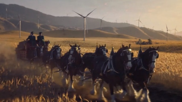 Budweiser Clydesdales run like the wind in picturesque ad